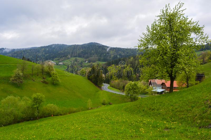 A very green panoramic scenery in a countryside, a forest view and an empty road on a cloudy spring day. A very green panoramic scenery in a countryside, a royalty free stock photos