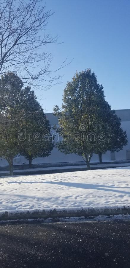 Very green trees with snow royalty free stock images