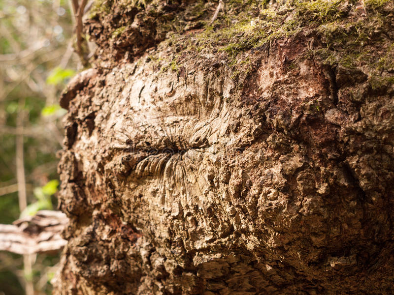 A Very High Detailed Macro of Bark on A Tree with Lots of Texture and Cracks and Natural Patterns. In Nice Light looking Very Stunning and Awesome royalty free stock images