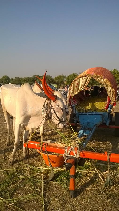 Ox and bullock cart royalty free stock images