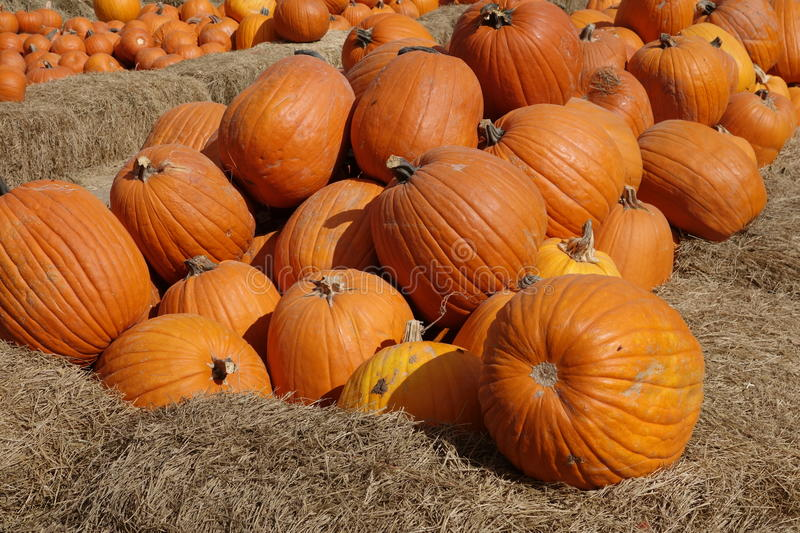 Very large pumkins royalty free stock photography