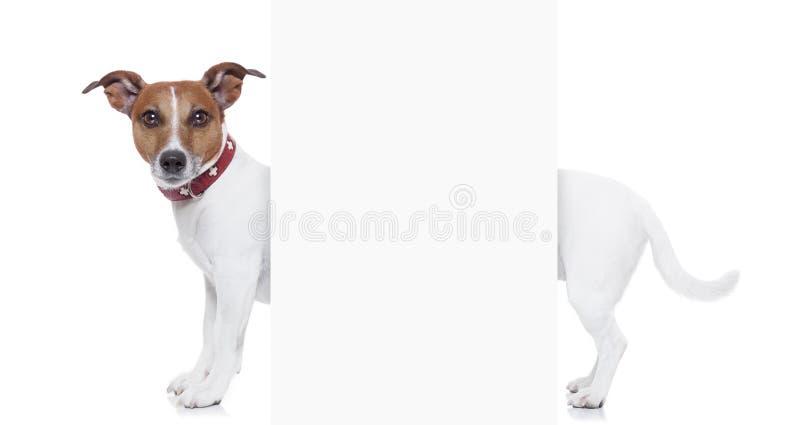 Very long dog stock photography