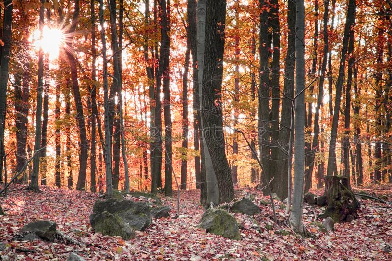 Nice Forest River Stock Photo. Image Of Foliage, Grow
