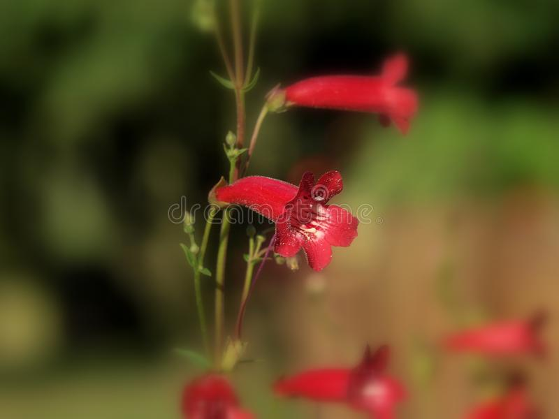 Detail of very nice red flower royalty free stock images