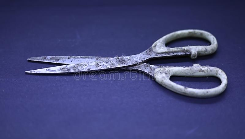 very old rusty scissors or metal scissors on blue background royalty free stock image