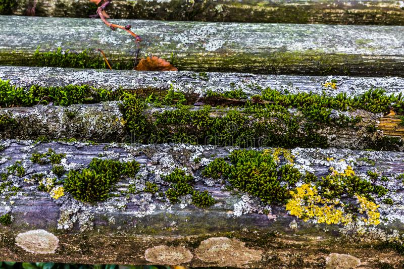 Very old weathered rustic wood texture with moss and cracks on t stock images