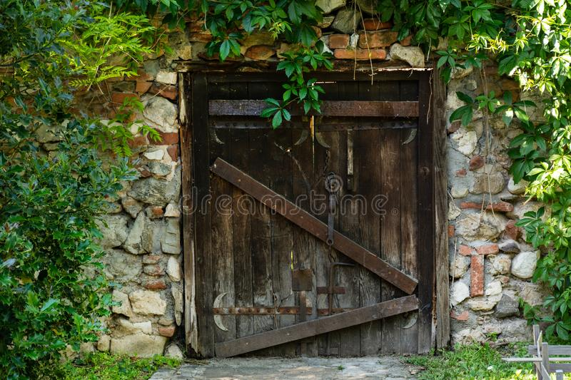 The very old wooden door on the house and wall covered with green leave of plants. Exterior view of the door with an old metal padlock. Old building concept stock photo
