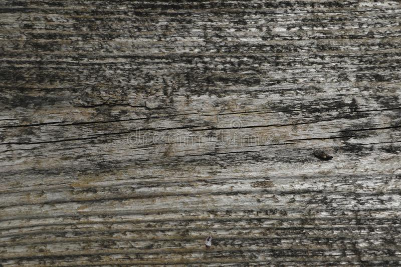 very original old wood texture royalty free stock photo