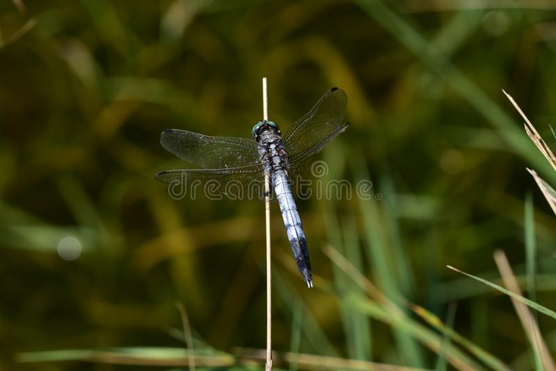 Very pretty colorful dragonfly close up stock photography