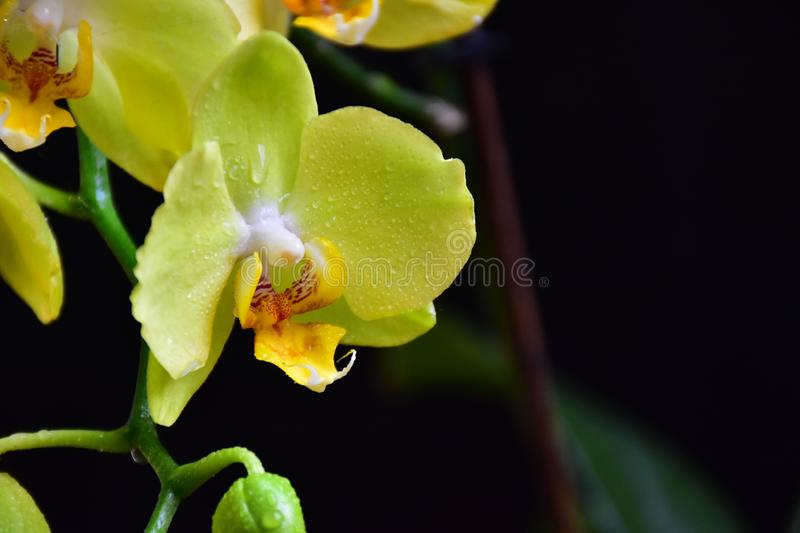 Very pretty colorful  orchid im my room royalty free stock photography