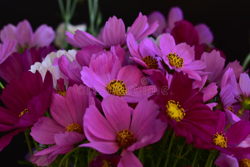 Very pretty colorful summer flower close up royalty free stock image