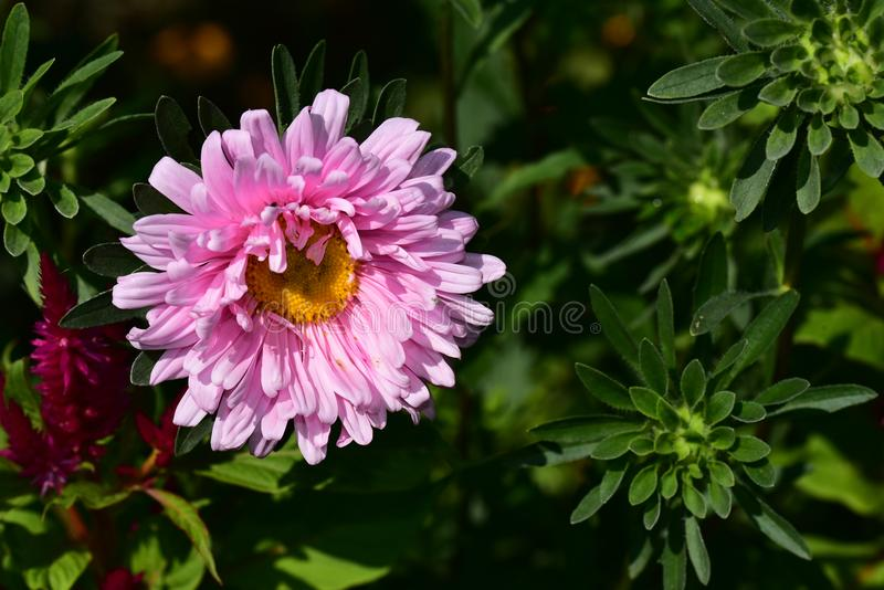 Very pretty colorful summer flower close up stock images