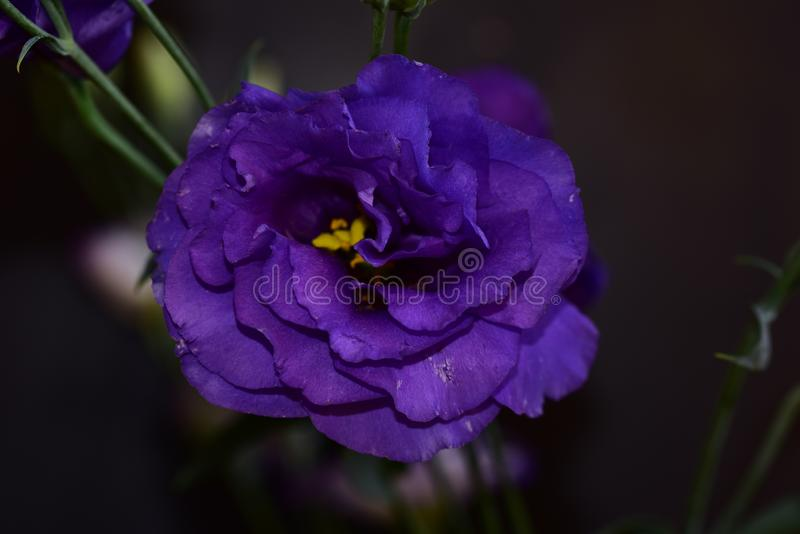 Very pretty colorful summer flowers close up royalty free stock photos