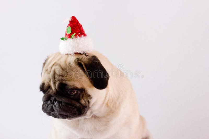 Very sad dog pug with christmas hat on the white ground. Isolate royalty free stock photos