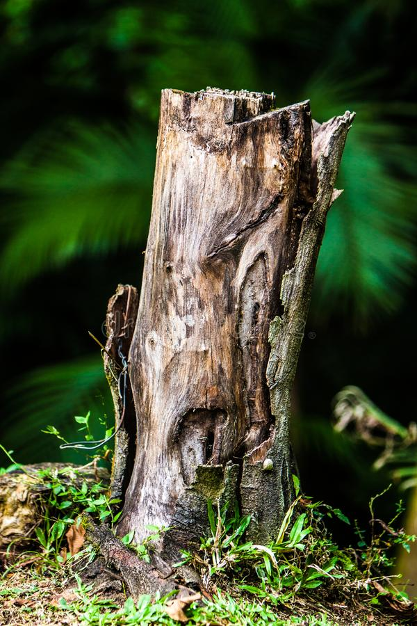 The crying tree. A very sad image of a cut tree that seems to show a lot of sadness and loneliness stock images