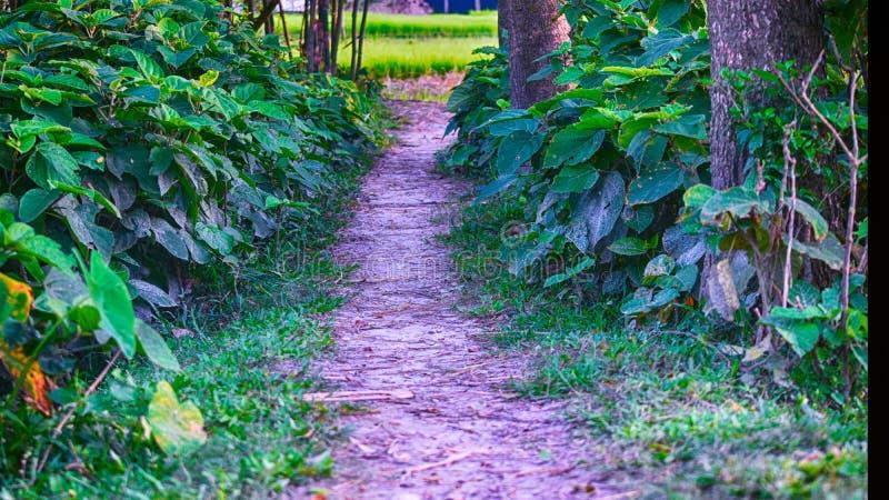 The narrow path royalty free stock photos
