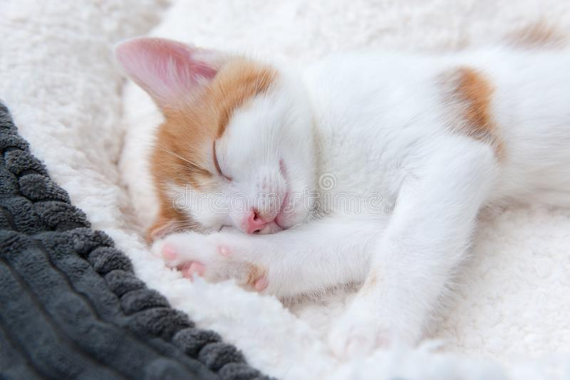 Very sleepy cute little kitten in a basket. Single cute tired little white and ginger kitten sleeping in a woolly basket stock images