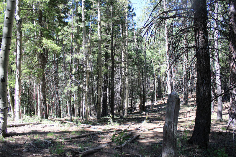 A Very Small Clearing. In a huge forest that seems to go on forever royalty free stock photography
