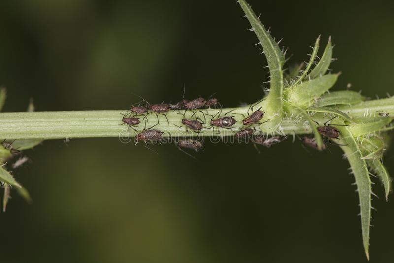 Very small insects on the stem of the plant royalty free stock photo