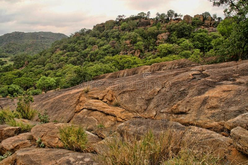 Very special vegetation on the rocks of the Matopos National Park, Zimbabwe stock image