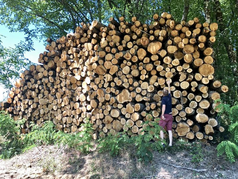 Huge stack of logs by side of road. Very tall pile of stacked logs in France with man standing next to it to give perspective royalty free stock images