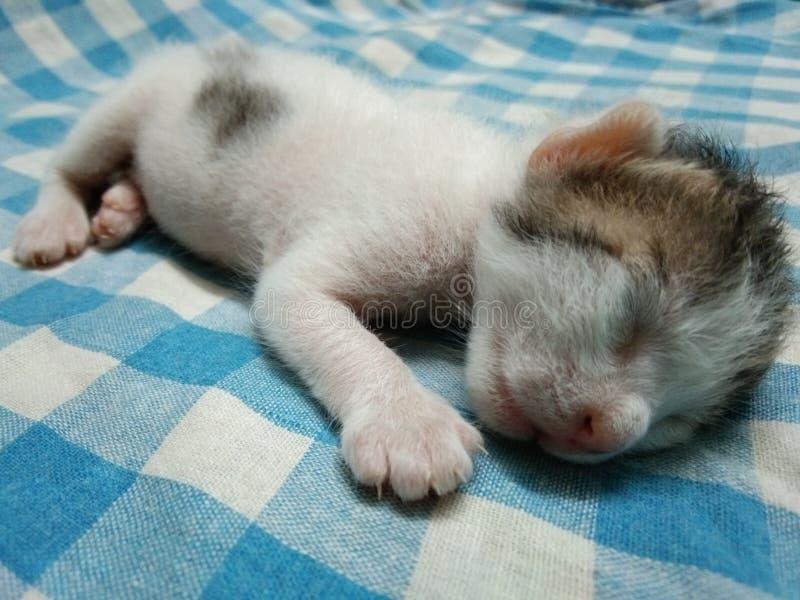 Very Tired Baby Kitten Sleeping. Very Tired Cute Baby Kitten Sleeping Picture stock photo