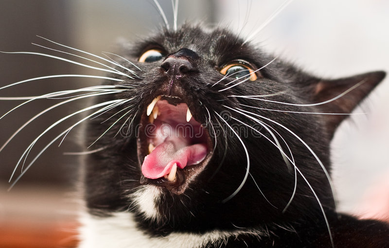 Very wicked cat. But he is nice pet royalty free stock photography