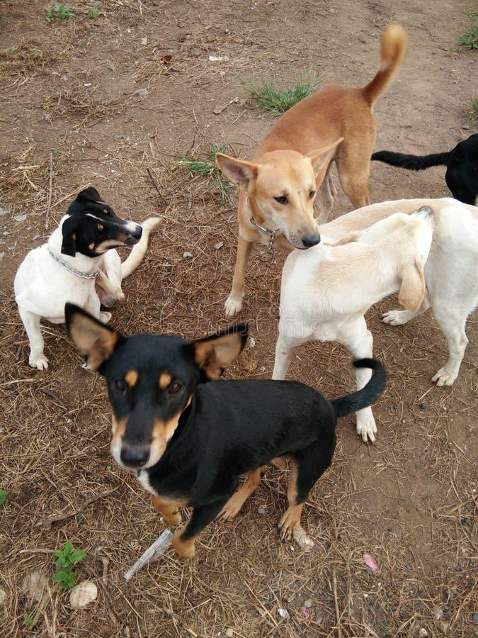 verzamelde groep honden stock afbeeldingen