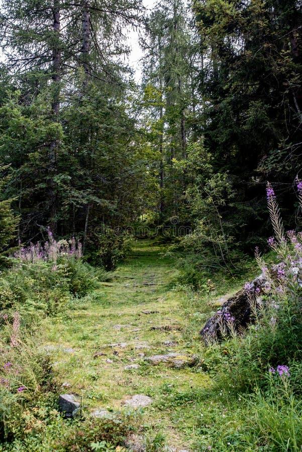 Verzauberte Bahn in einem Wald lizenzfreie stockbilder