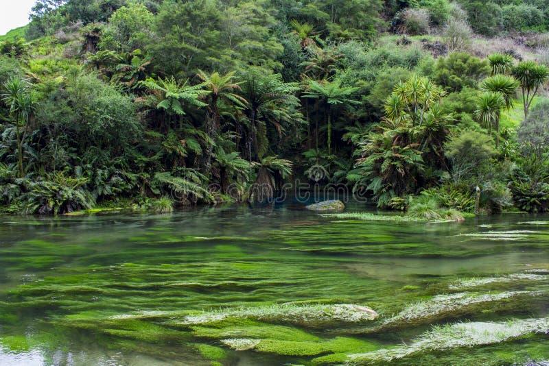 Verzauberte Landschaft mit reinem klarem waterand und einem magischen blauen Pool surronded durch Bäume des Waldes stockfotos