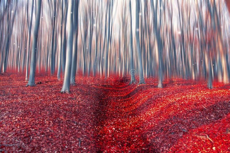 Verzauberter Forest Path Düsterer Wald der Märchen mit Bäumen und dri lizenzfreie stockfotografie
