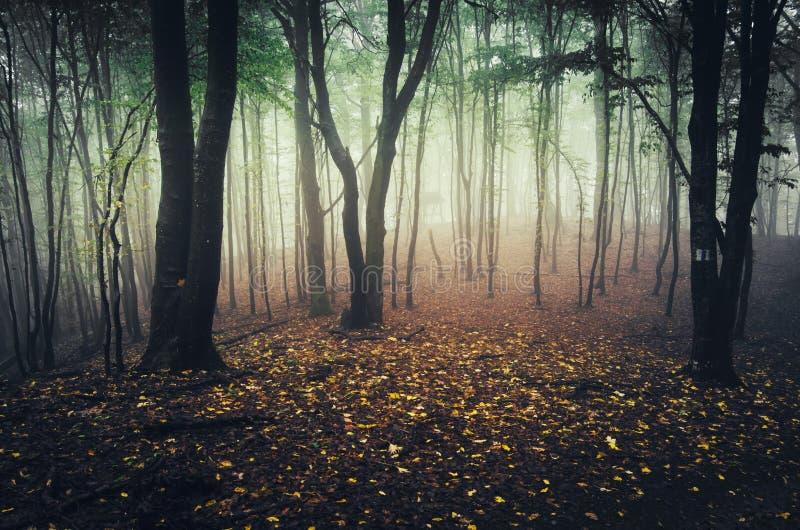 Verzauberter Herbstwald mit gefallenen Blättern stockfoto