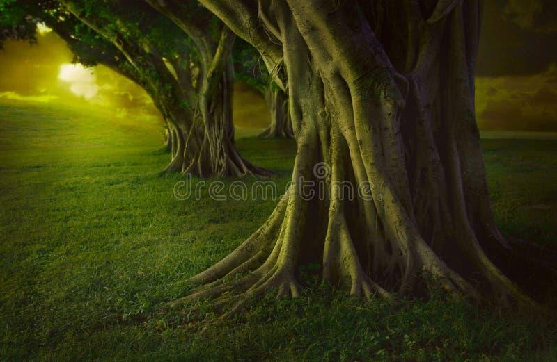 Verzauberter Wald stockbild