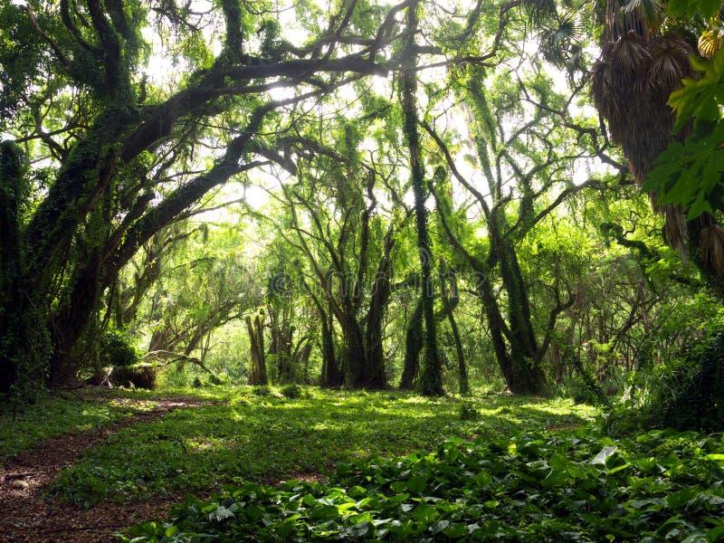 Verzauberter Wald stockfotos
