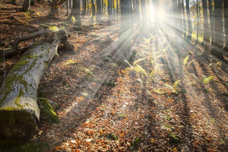Verzauberter Wald stockfotografie