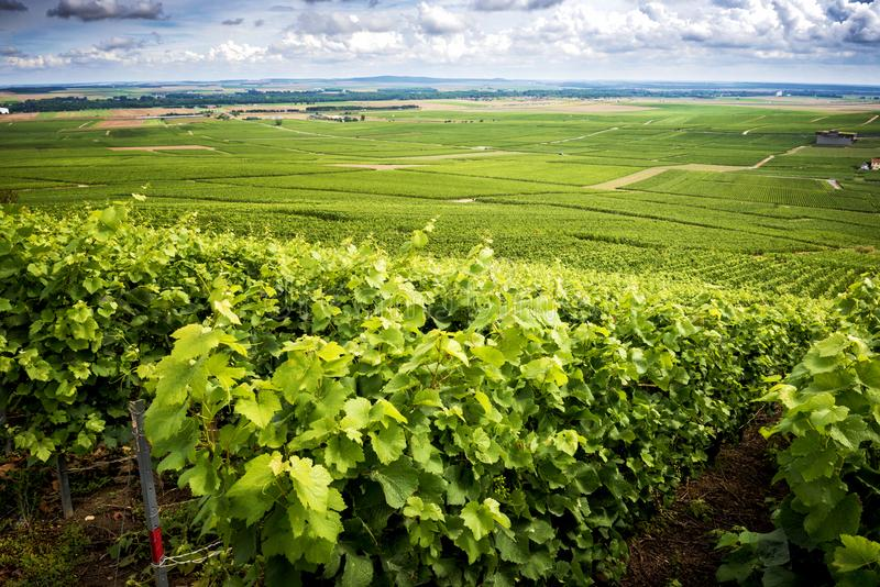 Champagne, Vineyard in the hills near Vernezay. In the background the plain with vineyards. France stock photos