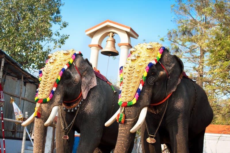 Verzierte Elefanten für Parade lizenzfreie stockfotos