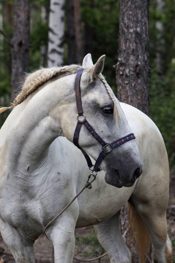 Verzierte freundlich Pferd an der lokalen Fiesta, Andalusien stockbild