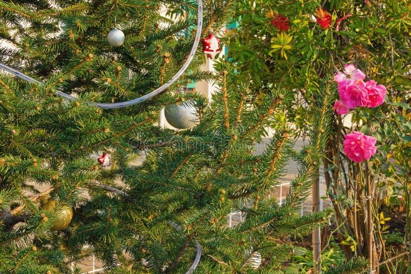 Verzierter Weihnachtsbaum nahe dem Blühen stieg auf die Straße im Mittelmeerdorf stockfotografie