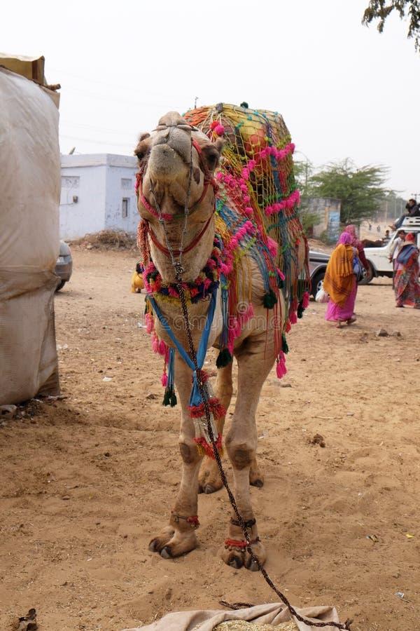 Verziertes Kamel an der Pushkar-Messe, Indien stockfotografie