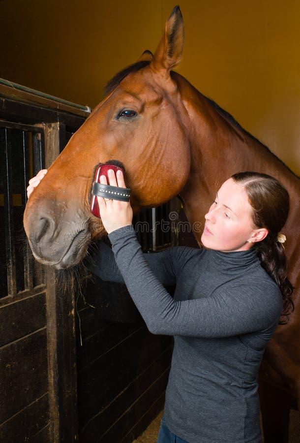 Verzorgend paard royalty-vrije stock afbeelding