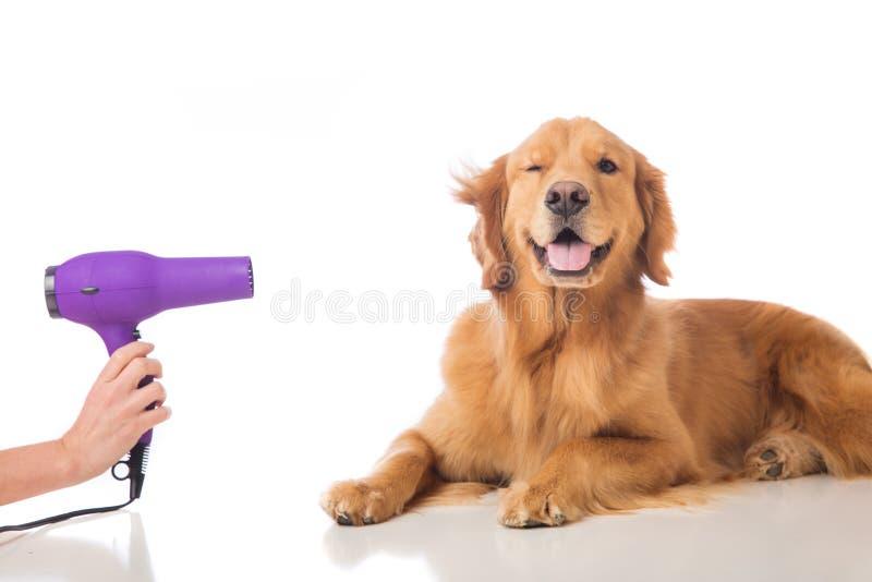 Verzorgende hond stock fotografie