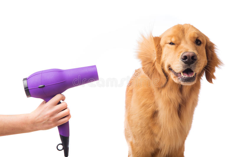 Verzorgende hond royalty-vrije stock foto's