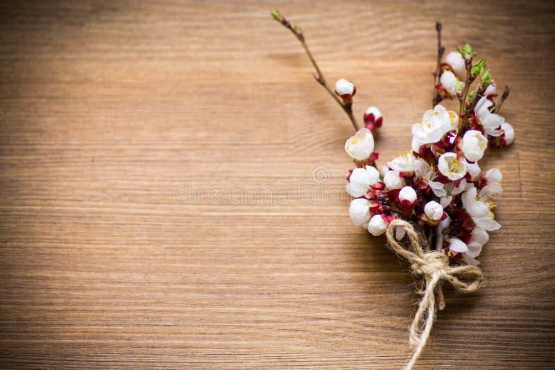 Verzweigen Sie sich mit Aprikosenblumen auf einem dunklen Hintergrund stockfotografie