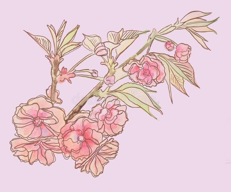 Verzweigen Sie sich mit Blumen und Blättern Empfindliches Rosa lizenzfreie abbildung