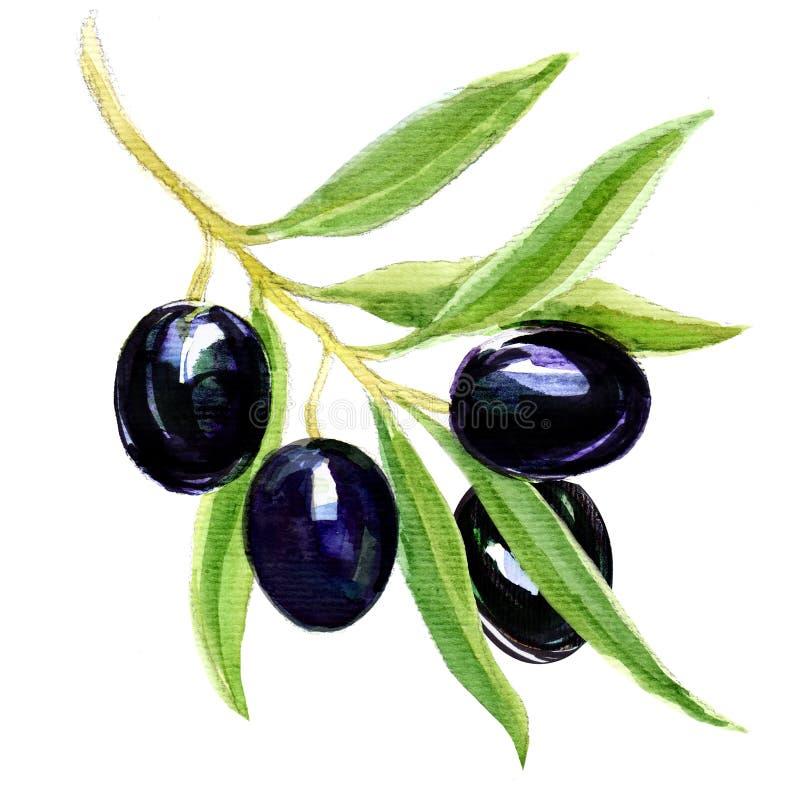 Verzweigen Sie sich mit schwarzen Oliven vektor abbildung