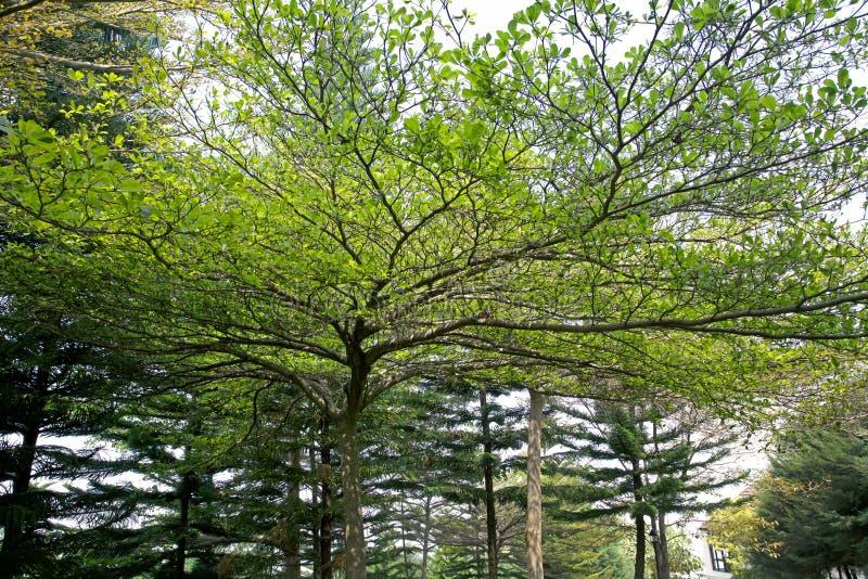 Verzweigt sich Bäume lizenzfreies stockbild
