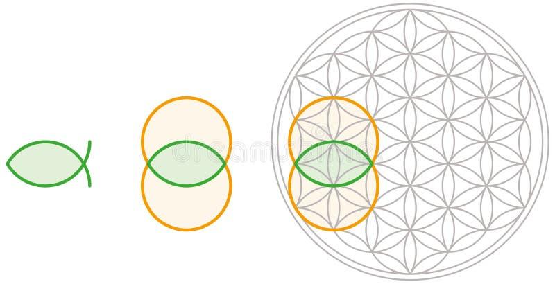 Download Vesica Piscis In Flower Of Life Stock Photo - Image of golden, pattern: 43114354