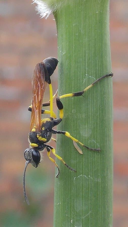 vespa immagini stock