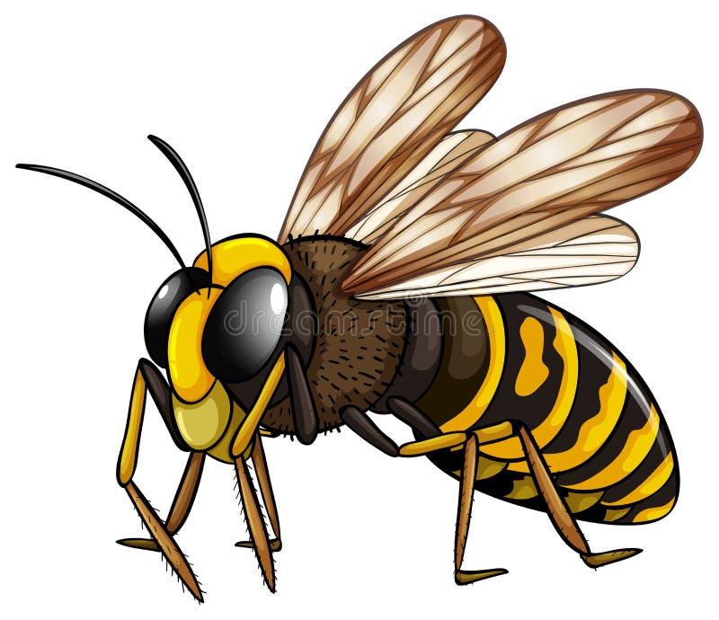 vespa ilustração royalty free